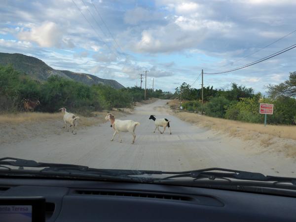 Baja street